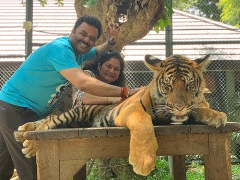 face-to-face-encounter-with-real-grown-up-tigers-|-tiger-kingdom-|-phuket,-thailand-travel-2019