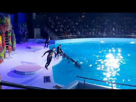 Дельфинарий Новосибирск-2019