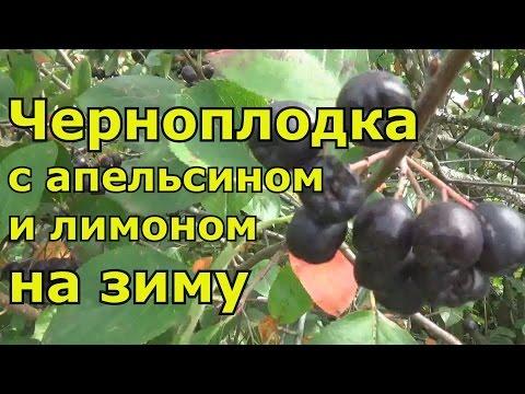 черноплодная рябина варенье с лимоном