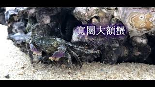 Publication Date: 2019-11-04 | Video Title: 優異 - 汀角零距離 - 聖公會林護紀念中學
