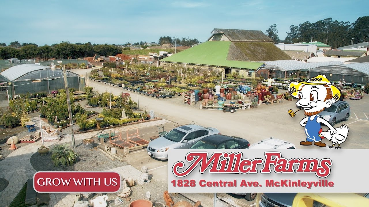 Miller Farms Nursery 2017