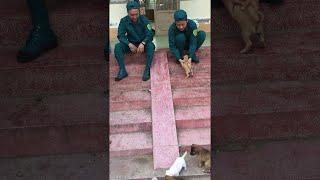 Puppy Slide  || ViralHog