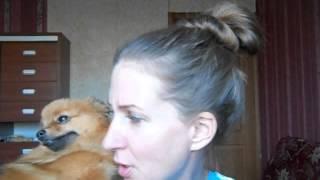 Сухой корм, или каша ? Как приучить собаку есть кашу ? И чем нельзя кормить .