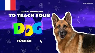 Teach Your Dog Commands In French (20 Common Words)