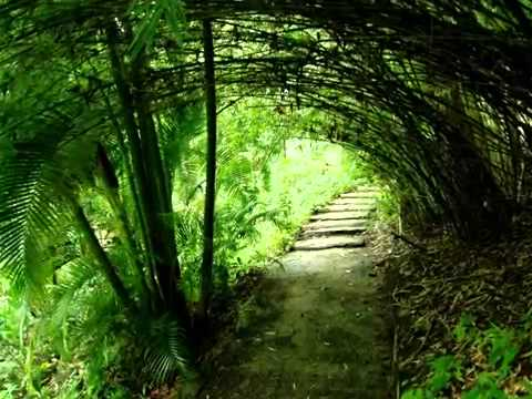 Flower Forest Barbados With Glory Tours Barbados YouTube - Barbados tours