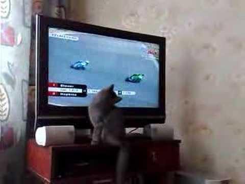 MotoGp cat
