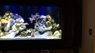 40 Gallon Marine Aquarium Hanging On The Wall