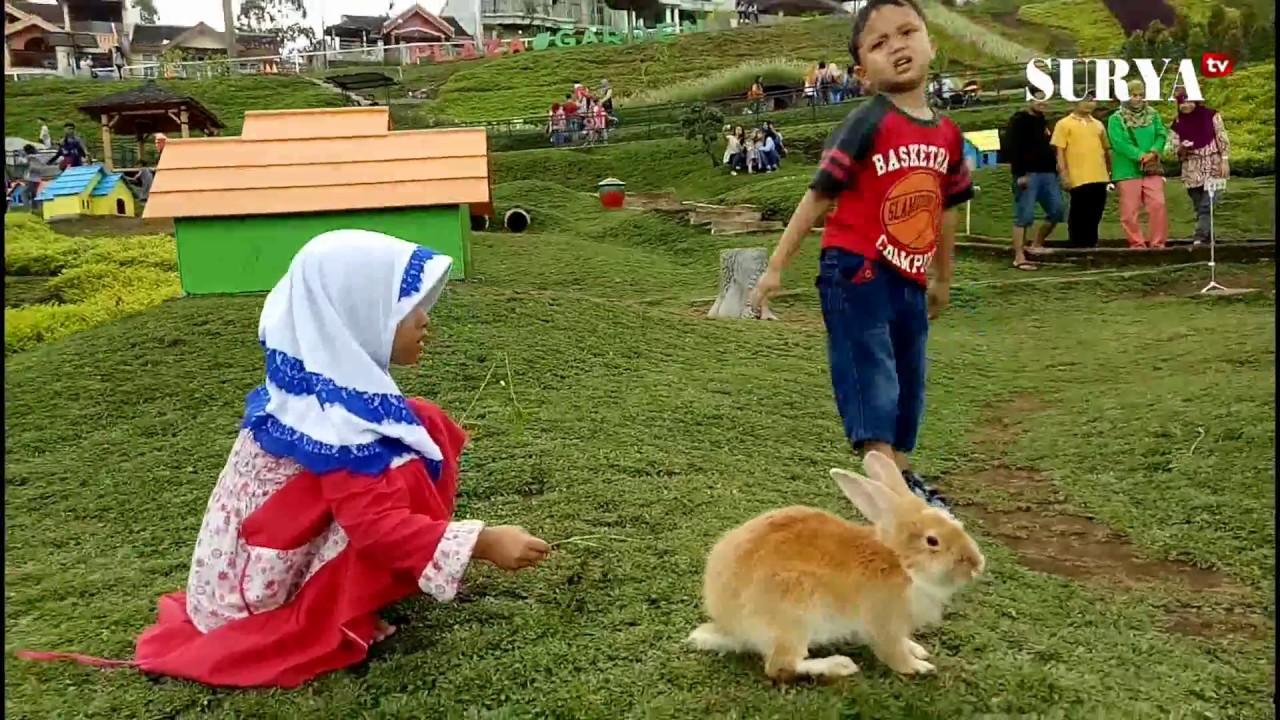 Taman Kelinci Di Pujon Anak Anak Bermain Dengan Kelinci Sepuasnya