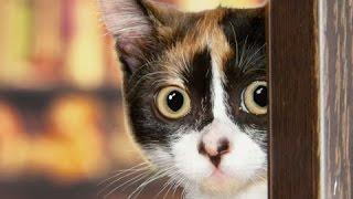 BGMでここまでスリリングに、子猫の「だるまさんは転ばない」