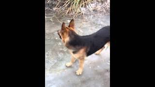 Собака долбит лед