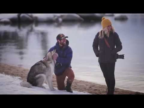 Loki the Wolfdog and Marley Vacation in a Pup
