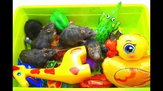 Learn Animals Names | Education Video | Toys For Kids|  Real Rats