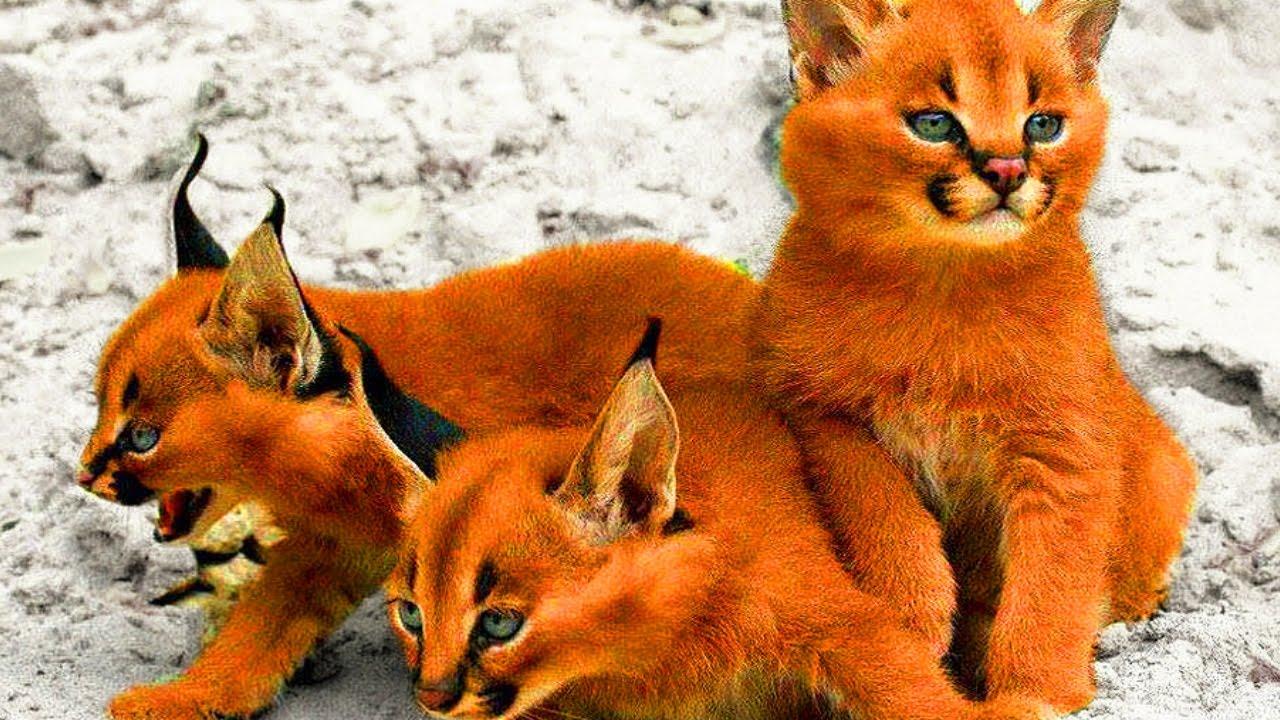фотографии про кошек