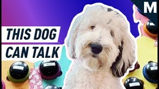 "This Dog Can ""Talk"" To Her Owner 