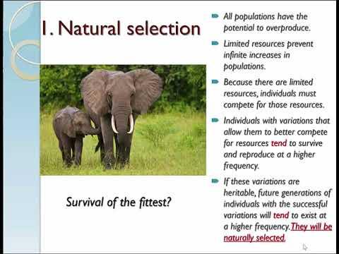 origin of species pt1 2