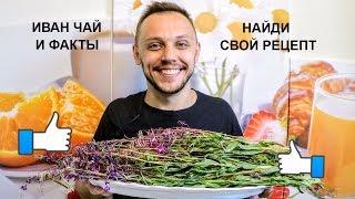 Иван чай (копорский чай) ИНТЕРЕСНЫЕ факты польза и вред