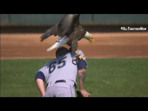 Bald eagle lands on Mariners' Paxton at Twins game