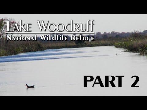 Lake Woodruff National Wildlife Refuge: Part 2