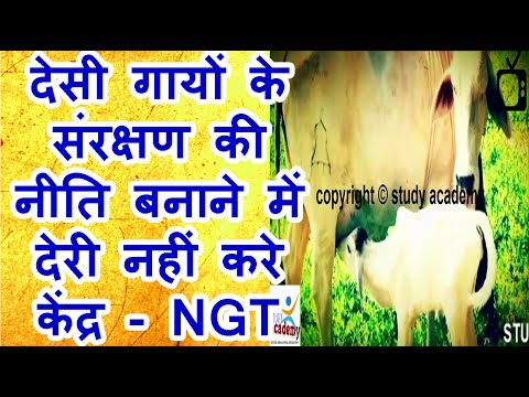 Do not delay the policy of conservation of indigenous cows Center   NGT