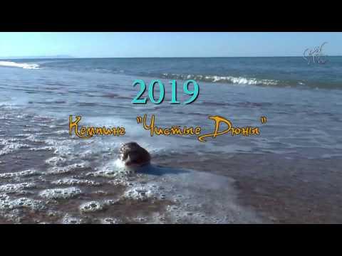 Как проехать в кемпинг Чистые Дюны 2019 г. Благовещенка