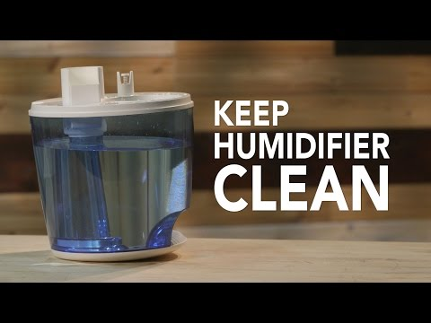 Smart Cleaning Tip #6: Keep Your Air Fresh | Consumer Reports