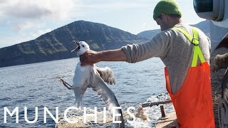 Fat Birds Are Easy Prey: Fulmar Hunting in the Faroe Islands