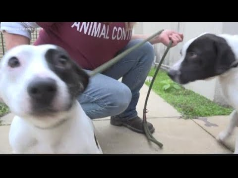 Crowded Animal Shelter May Have To Euthanize Dogs For First Time In Years
