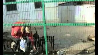 БРИТ КОРМА для собак 30 05 2014 сжатый