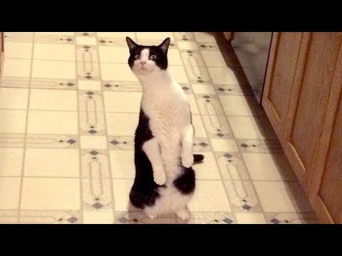 Funny CATS - You WON'T REGRET WATCHING THIS, you will LAUGH LIKE HELL!