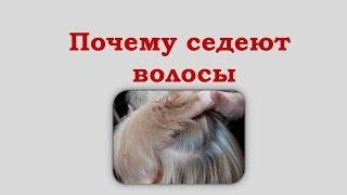 видео Почему седеют волосы. Основные ПРИЧИНЫ поседения волос и как с ним бороться
