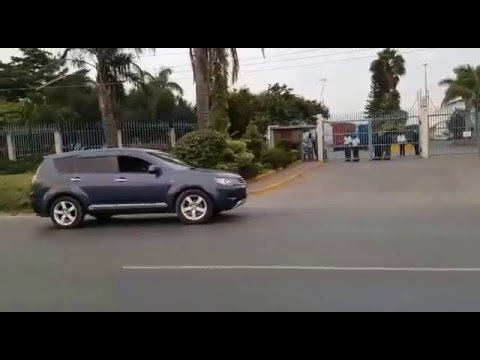 Lion escapes. Nairobi