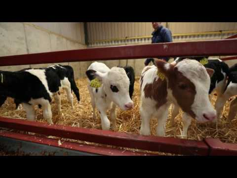 Dairy Farmer Michael O Carroll - Calf Feed For Growth Programme