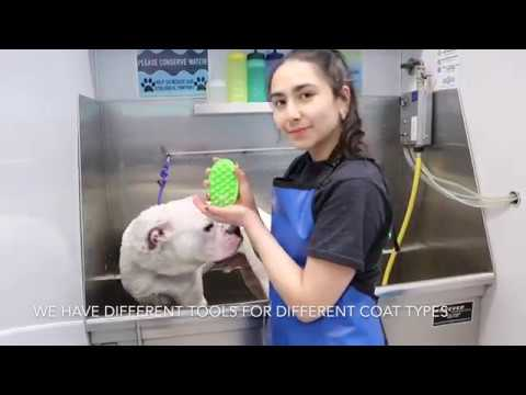 Brookside Barkery & Bath Self-Serve Pet Wash Instructional Video