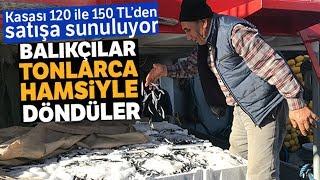 Karadeniz'de Hamsi Bereketi: Tonlarca Hamsiyle Döndüler