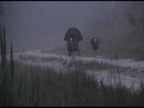 Hunters Double Up In NC Turkey Season 2019