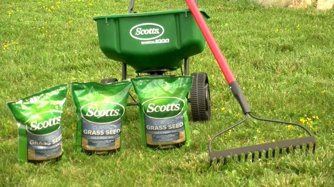 doityourself lawn overseeding, Natural flower