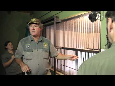 Leopard Relocation at Moholoholo Rehabilitation Centre