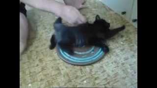 Котик крутится на диске!(, 2014-06-09T17:13:04.000Z)