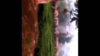 Herd of wild elephants in Munnar Tea Estate