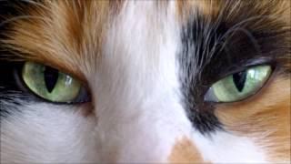 Time After Time: Animal Instinct