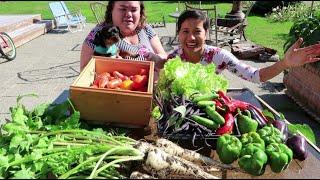 Chị Chồng và cháu dâu đến nhà chơi, thu hoạch rau củ  vườn nhà