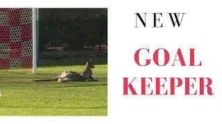 Kangaroo Playing Football   New Goalkeeper in Australian Women League