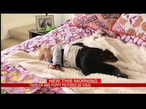 Toddler Napping With Puppy Goes Viral YouTube - Toddler naps with puppy