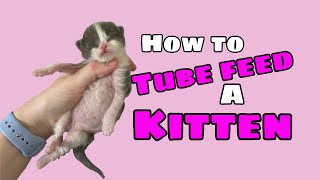 How to Tube Feed a Kitten