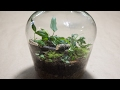 Making a Bottle Terrarium + Closed Terrarium Basics