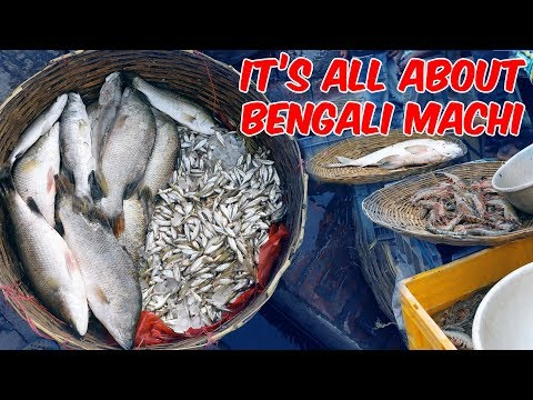 Kolkata Fish Market With Price In 2020| Live Auction Trading Of Fish | VLOG² 25
