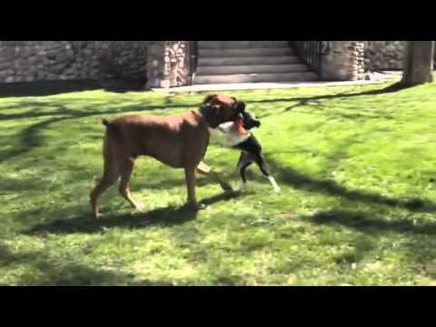 tough-dog-toys-survive-doggie-daycare