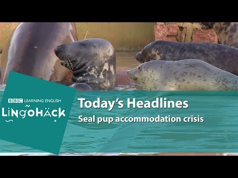 Learn today's words and phrases: sanctuary, rescue centre, rehab, recuperation