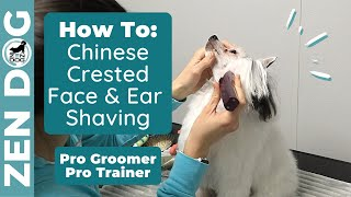 Shave your Chinese Crested's Face and Ears Like a PRO