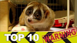 TOP 10 Cute animals, that could kill you